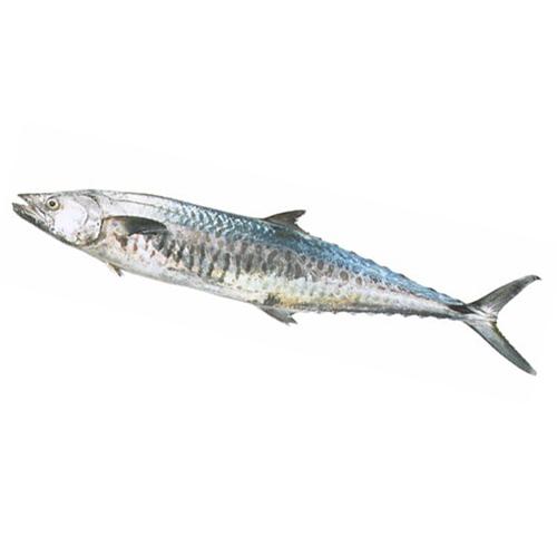 Seer fish