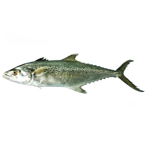 Seer-fish