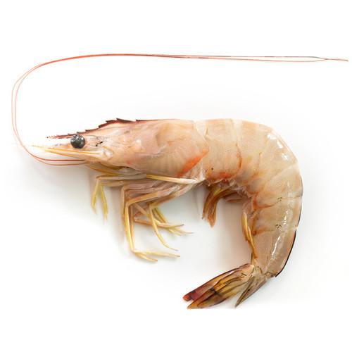 White prawn
